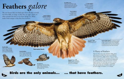 Homeschoolers homeschooling family travel adventure things to do with kids teens spgfan smiles per gallon teaching at home birds of prey raptors life science biology books video charts media vocabulary free recommended resources eagles hawks falcons osprey owls vultures
